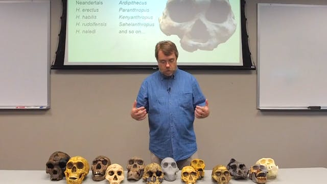 Paleontology: Hominid Fossil Record
