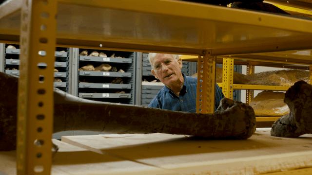 15. Exploring Fossils & Paleocurrents