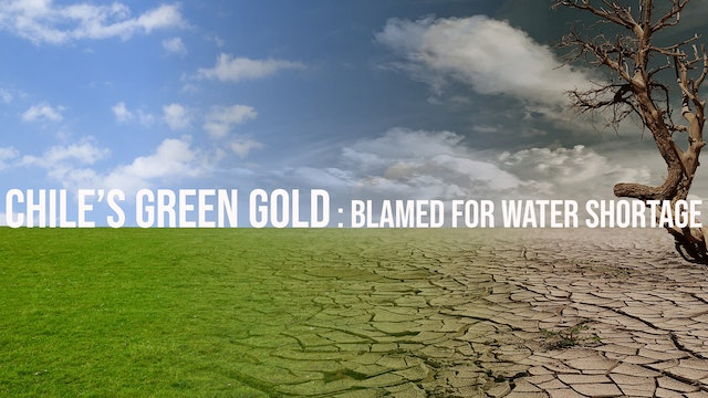 Chile's 'Green Gold' is Blamed for Water Shortages