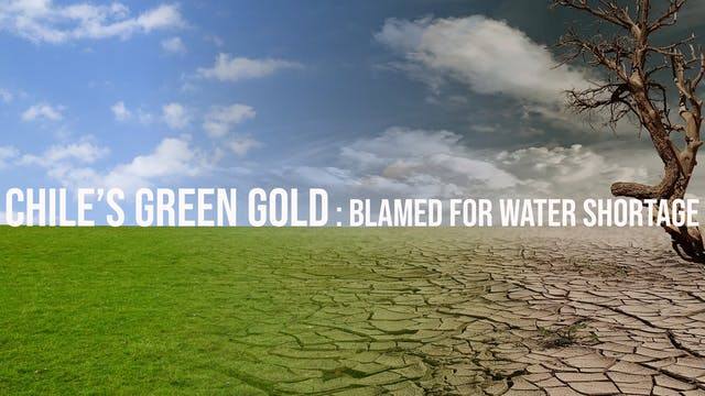 Chile's 'Green Gold' is Blamed for Wa...