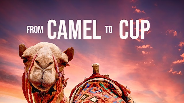 From Camel to Cup