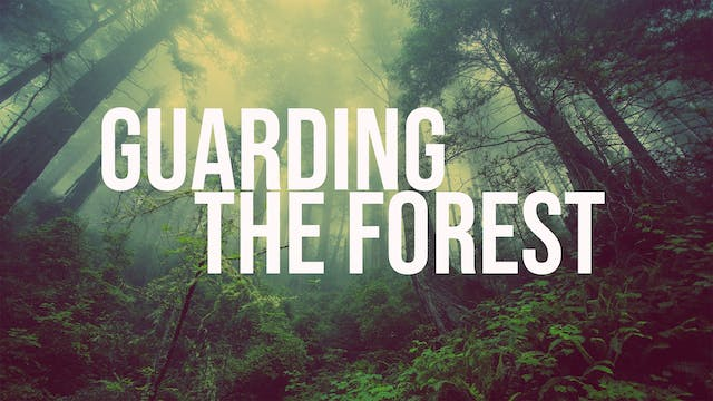 Guarding The Forest