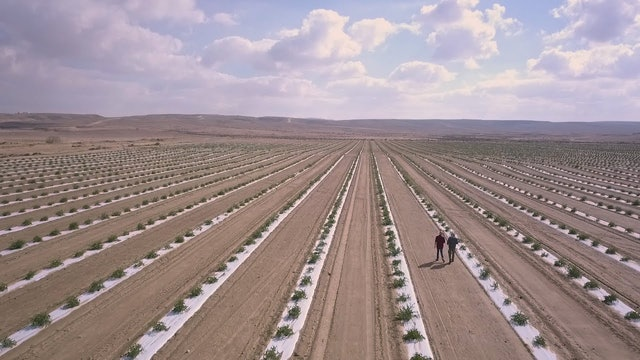 Agriculture in the Negev – Today's Desert Pioneers