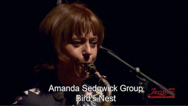 """Amanda Sedgwick Group """"Bird's Nest"""""""