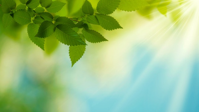 Daily Mindfulness Journal