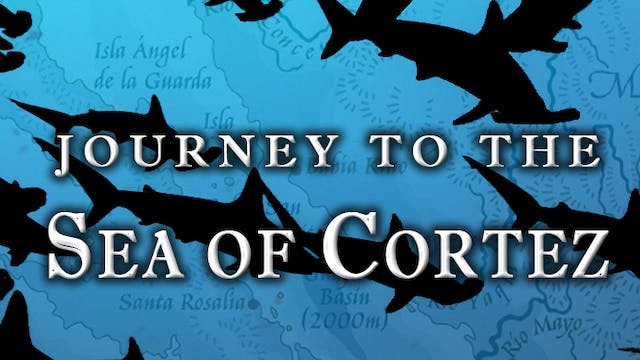 Journey to the Sea of Cortez: Retracing the Steinbeck/Ricketts Expedition of 1940