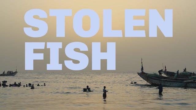 Stolen Fish