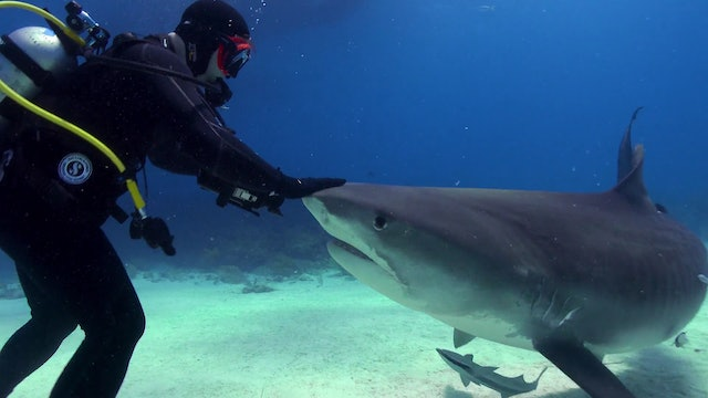 Shiver of Sharks