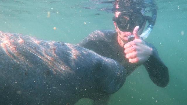 Marine Mammal Mashup