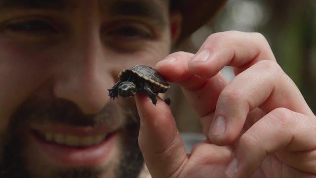 Tortoises and Sea Turtles