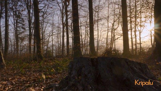 Nature Meditation (Indoor or Outdoor)