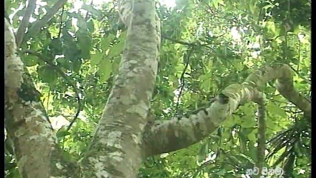 Chamariya Ep2