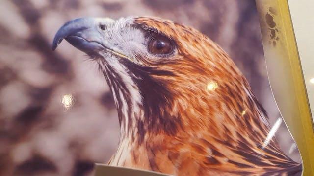 Airbrushing a Bird of Prey (Part 2)