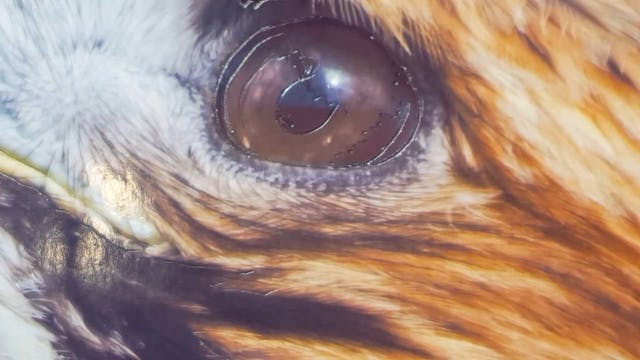 Airbrushing A Bird of Prey (Part 4)
