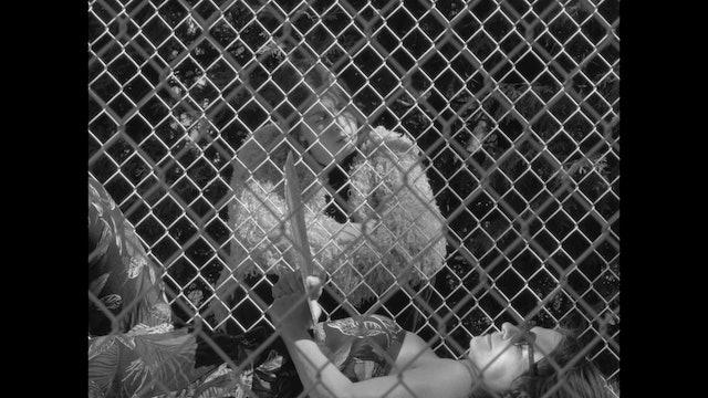 SPEAK LOVE (FR), un film de Emmanuel Tardif