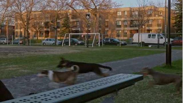 LES VAILLANTS un film de Pascal Sanchez
