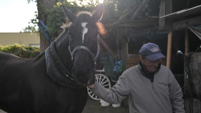 LE HORSE PALACE un film de Nadine Gomez
