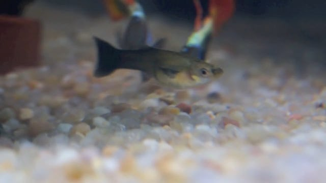 A video of a fish