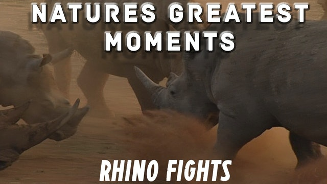 NGM206 - Rhino Fights