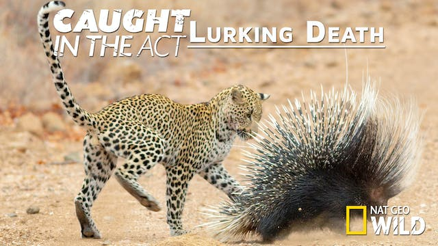 Caught in the Act: Lurking Death