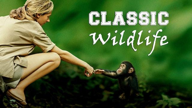 Classic Wildlife