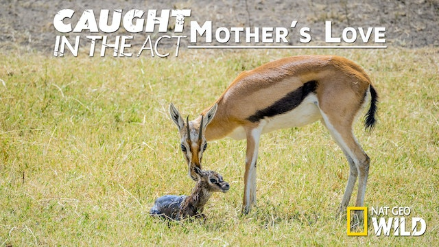 Caught in the Act: Mother's Love