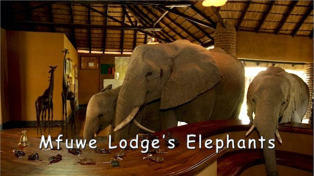 WZ04 - Mfuwe Elephants