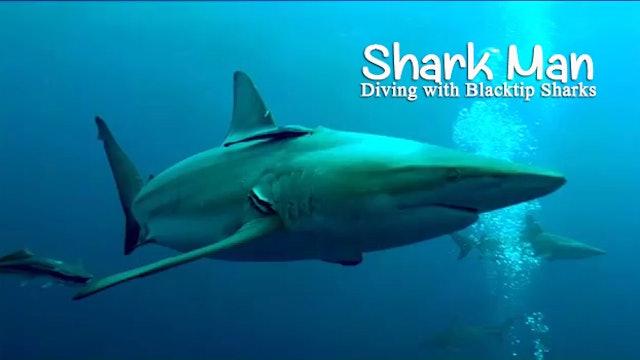 SHARK MAN - 3 - Free Diving with Blacktip Sharks