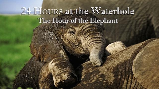 24-3 : Elephant Hour