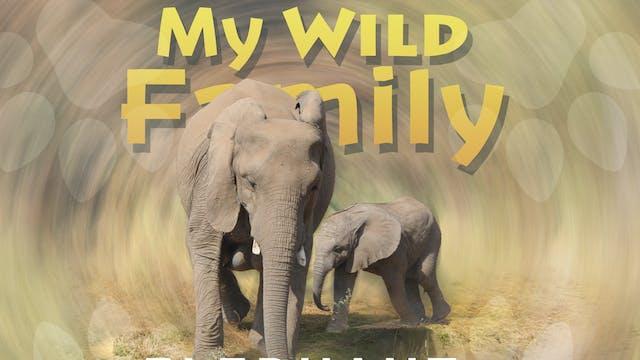 MWF107 - Baby Elephant