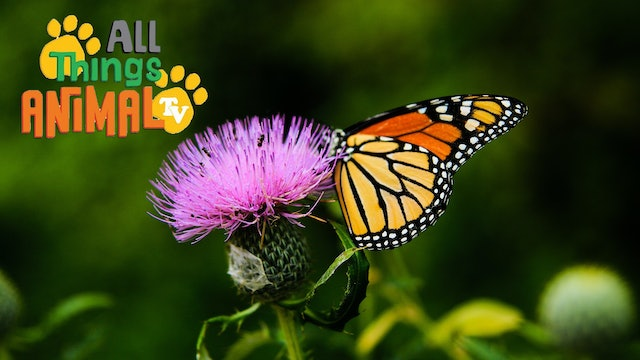 All Things Animal : Butterflies