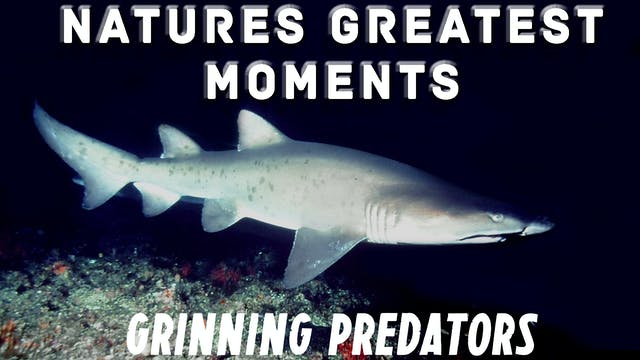 NGM103 - Grinning Predators
