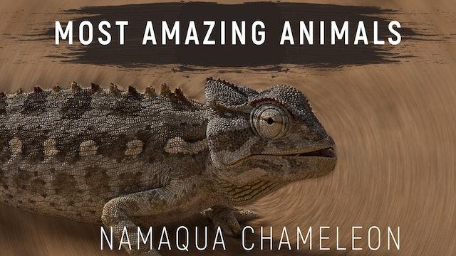 MAA05 - Desert Chameleon