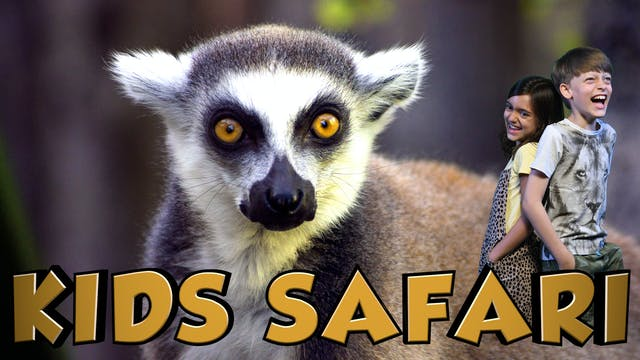 KIDS SAFARI MADAGASCAR - LEMUR ISLAND