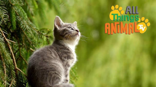 All Things Animal : Cats