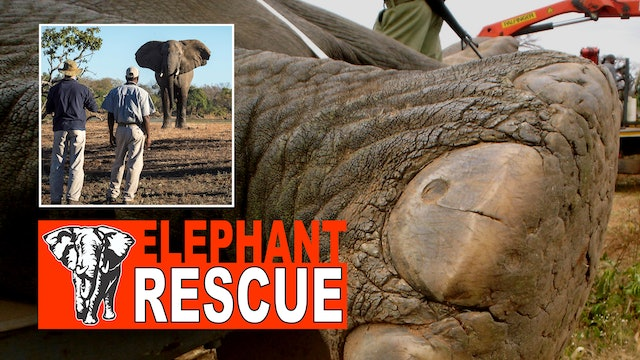 The Great Elephant Rescue