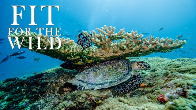 FFW10 - Adapted to the Reef