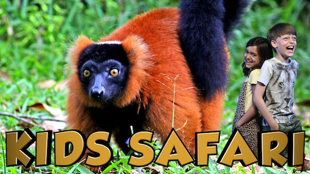 KIDS SAFARI MADAGASCAR - RUFFED LEMUR