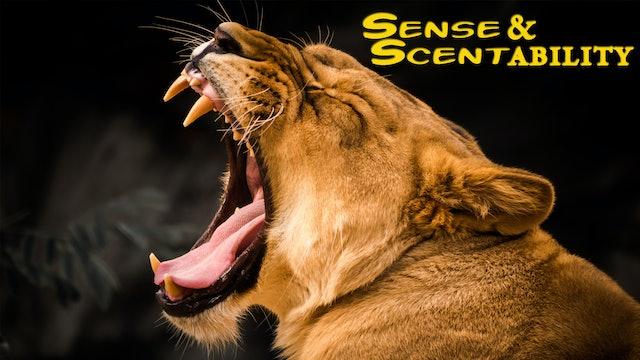 Sense & Scentability
