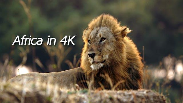Africa in 4K