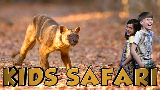 KIDS SAFARI MADAGASCAR -  FOSSA & TOR...