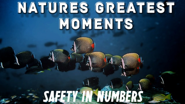 NGM109 - Safety in Numbers