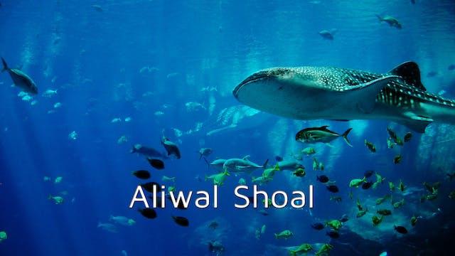 DA12 - Aliwal Shoal