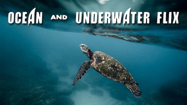 Ocean & Underwater