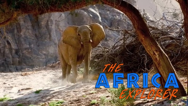 AE05 - Desert Elephants of the Kaokoveld