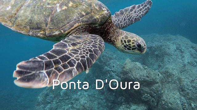 DA08 - Ponta D'Oura