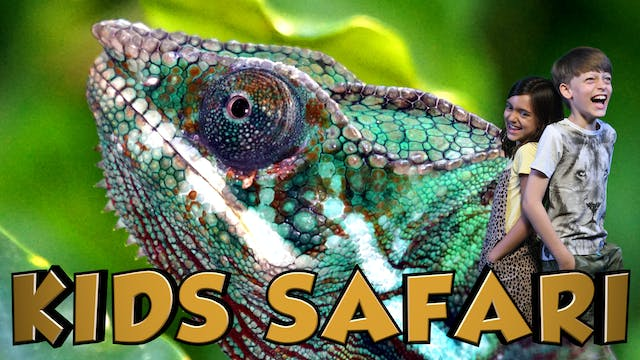KIDS SAFARI MADAGASCAR - CHAMELEONS