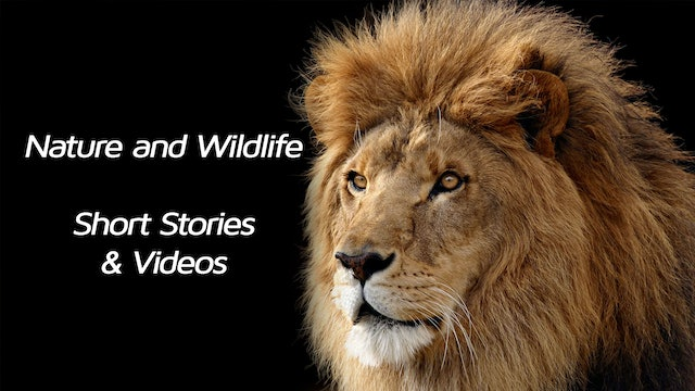 Wildlife and Nature Shorts