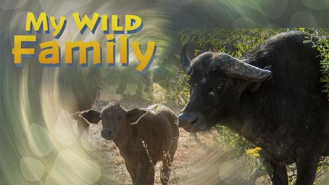 MWF206 - Baby Buffalo