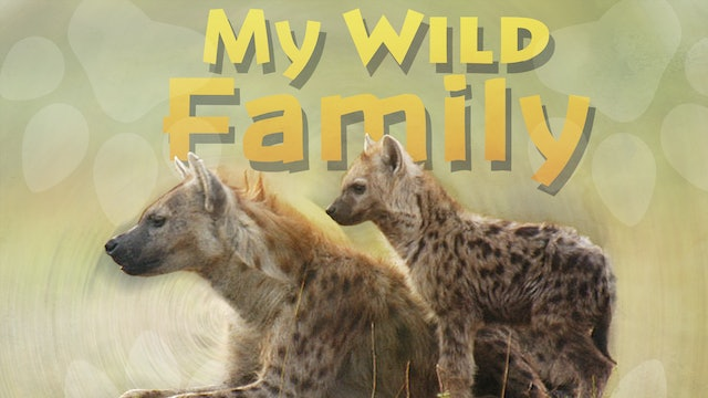 MWF104 - Baby Spotted Hyena